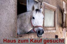 Gesuch +++ Haus mit Stallgebäude für 2 Pferde oder kleiner Resthof zum Kauf in Schleswig-Holstein  Angebote von Maklerinnen und Maklern im Gemeinschaftsgeschäft sind erwünscht. Wir freuen uns auf Ihre Angebote!  http://immofux-makler.de/gesuch-haus-mit-stallgebaeude-fuer-2-pferde-zum-kauf-in-schleswig-holstein/