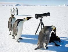Reporting from the South Pole - Imgur