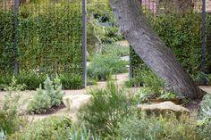 Australian Native Garden, Adelaide Botanical Gardens