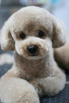 What's In, What's Out: Puppy Grooming Trends for 2013                                                                                                                                                                                 More