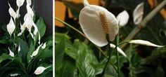 Olá pessoal!! Já conversamos anteriormentesobre uso de plantas naturais na decoração da sua casa e não pense você que é apenas porque elas são bonitas e trazem frescor com suas cores. Há outra raz…