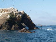 Réserve Naturelle des Sept Îles - Perros-Guirec - Les avis sur Réserve Naturelle des Sept Îles - TripAdvisor