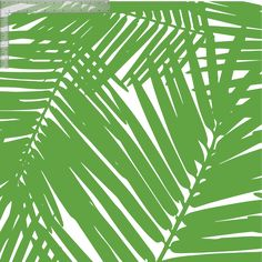 Jungle Leaves #wallpaper #coveredwallpaper #modernwallpaper #paperyourwalls #design #homedecor #home #decor #modern