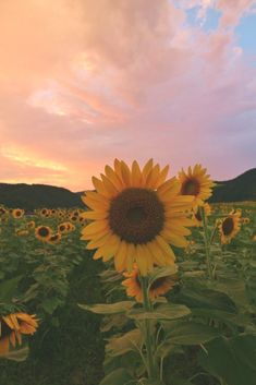 Sunflowers – Sayo City, Hyogo Prefecture, Japan ::… C – Flowers Nature Ideas – Blumen hintergrund iphone Tumblr Wallpaper, Nature Wallpaper, Wallpaper Quotes, Trendy Wallpaper, Smile Wallpaper, Wallpaper Space, Sunset Wallpaper, Aesthetic Pastel Wallpaper, Aesthetic Backgrounds