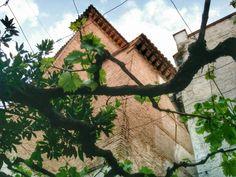 La parra de Conchita con San Cristóbal al fondo.