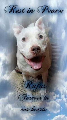 I'll always love you and miss you Rufus. Run free now honey! <3 <3