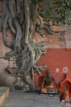 euphoricecstacy123:  sadhu indi….the tree reminds me of their dreadlocks.