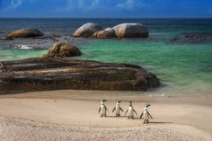 Your ultimate South Africa travel guide, with tips, ideas on things to do, and best things to see in South Africa. Great for first-time and returning travelers. South Africa Wildlife, Boulder Beach, Beaches In The World, Mundo Animal, Most Beautiful Beaches, Africa Travel, Adventure Travel, Places To Go, Penguins