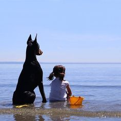 The Doberman Pinscher is among the most popular breed of dogs in the world. Known for its intelligence and loyalty, the Pinscher is both a police- favorite Dogs And Kids, All Dogs, I Love Dogs, Best Dogs, Dogs And Puppies, Doggies, Beautiful Dogs, Animals Beautiful, Cutie And The Beast