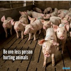 Be one less person ... | Animals | Animal cruelty