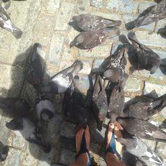 pigeon park, Puerto Rico