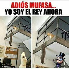 Funny Spanish Memes, Spanish Humor, Animal Memes, Cat Memes, Funny Images, Jokes, Cool Stuff, Funny Stuff, Random Stuff