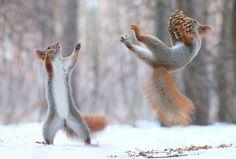 Le photographe russe Vadim Trunov réalise une session unique avec des écureuils Vadim Trunov est un talentueux photographe russe qui …
