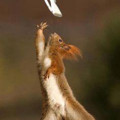 Colorguard Squirrel! @Sydney Barnett I LOVE THIS