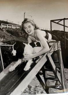 Marilyn Monroe with an English Springer Spaniel :) Gorgeous dog!
