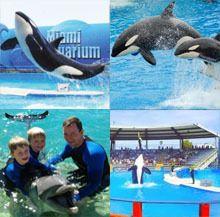 Miami Sea Aquarium Half Day Tour