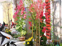 Common doorway vines-fabulous