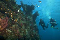 Liberty, el pecio de la isla de Bali    Las corrientes marinas que confluyen en la isla de Bali, punto de encuentro del Índico y el Pacífico, hacen que su biodiversidad sea infinita, con toda clase de peces y crustáceos, cangrejos orangután y de porcelana incluidos, pululando por sus arrecifes de colores y cristalinas aguas. Pero no son pocos los que 'pisan' su arena volcánica para bucear cerca del Liberty, un buque estadounidense hundido en la II Guerra Mundial.    www.buceas.es