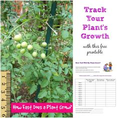 Bring math into the garden with this fun printable that can be used with any plant!