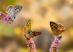 "500px / Photo ""Butterflies season "" by Niloufar Hosein zadeh"