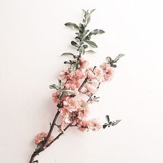 — Keep 'em coming, Mother Nature 🌿 source:. My Flower, Beautiful Flowers, Flower Branch, Simply Beautiful, Beautiful Images, Beautiful Things, Wallpaper Flower, Nature Source, Illustration Blume