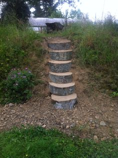 Beech steps from fallen tree