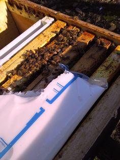 #BeeHappyTrival: vi posteremo 2 foto al gg che raccontano come l'attività di un alveare e di una comunità di apicultori in fondo sono simili. Ogni foto racconterà un azione e un impegno da parte nostra. CHI DI VOI SAPRA' DIRCI COSA STIAMO FACENDO? a fine maggio scopriremo premi e vincitori !! su partecipate e condividete