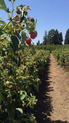 Underwood Farm // Moorpark, CA Fruit, The Fruit