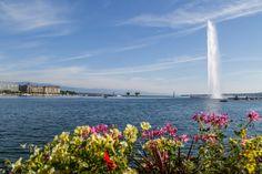 Crestasee Weekender, Swan Lake, Narnia, San Francisco Skyline, Switzerland, Travel Photography, Europe, Nature, Watercolor Water