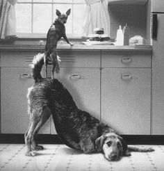 """accomplices"" From ""Pets Make it a Home: Lucy's House for the Prevention of Homeless Pets"" (Photographer unknown)"
