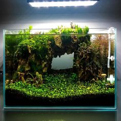 It's the answer Nano Planted Tank Design Inspirations to Displayed at the Office that Realising a High Stress Types Of Flowers, Types Of Plants, Throughout The World, Around The Worlds, Lily Meaning, Aquarium Landscape, Nano Tank, Language Of Flowers, Tank Design