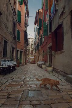 Dubrovnik, World, Street, Cats, Places, Travel, Cityscape Photography, Scenery, Gatos