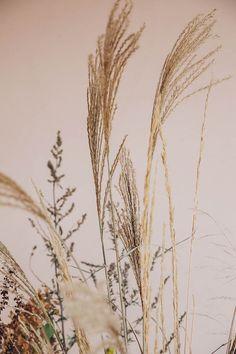 #grasses ~ETS
