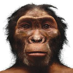 Homo habilis  First found: Olduvai Gorge, Tanzania, 1962    Significance: The first hominid known to have made stone tools    Open question: This poorly known species closely resembles Australopithecus and might actually belong in that genus instead of in Homo.