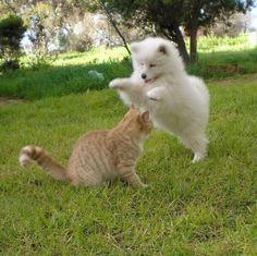 Twitter / dogpic84: 犬VS猫