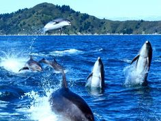 Search residential properties for sale on Trade Me Property, New Zealand's number one real estate website. French Pass, Marlborough Sounds, Dolphins, New Zealand, Property For Sale, Places Ive Been, The Good Place, Safari, Stuff To Do