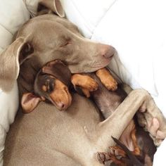 Obviously, Harlow and Stage were among the most popular. Just look at that love! | The 31 Most Popular Animal Instagrams Of 2014