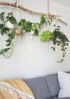 Room With Plants, House Plants Decor, Plant Decor, Living Room Decor, Bedroom Decor, Wall Decor, Hanging Plants, Indoor Plants, Deco Zen