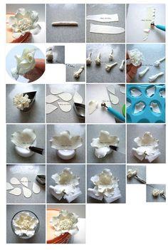 https://www.facebook.com/media/set/?set=a.732137393478655.1073741848.539695339389529&type=1 flower
