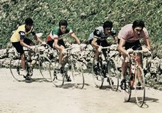 Risultato immagine per eddy merckx palmares Vintage Cycles, Sport, History, Image, 1970s, Legends, Pink, Road Bike, Italia