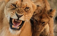 Close-up aggression by Jaco Marx