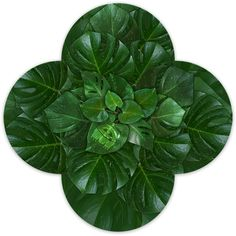 Brochures, Plant Leaves, Plants, Design, Image, Plant, Planets