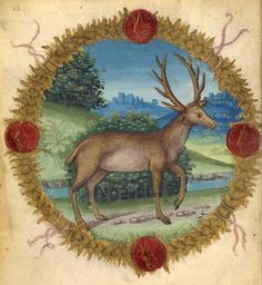 Fables and other poems, MS fol. - Images from Medieval and Renaissance Manuscripts - The Morgan Library & Museum Ancient Animals, Medieval Art, Bestiary, Renaissance, Mythical Creatures, Medieval Manuscript, Deer Drawing, Animal Paintings, Medieval Life
