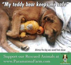 Our sweet and gentle dog, Ahimsa, loves his teddy bear. www.julianasfarm.org Keep Me Safe, My Teddy Bear, Love Him, Friends, Sweet, Dogs, Animals, Animales, Animaux