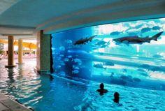 Awesome pool aquarium combo in a luxury hotel in Dubai.