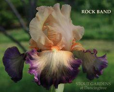 Iris ROCK BAND