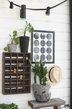 KUKKALA #indoorplants