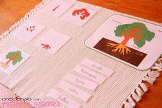 Botánica Montessori - El Árbol - Imprimibles Gratis