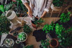 Hands of Woman Gardening by Lumina - Stocksy United Herb Garden, Vegetable Garden, Garden Plants, House Plants, Cactus Plante, Plant Aesthetic, Bonsai, Plants Are Friends, Tree Shop