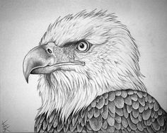 How to Draw a Eagle | Bald Eagle Portrait by *Techdrakonic on deviantART